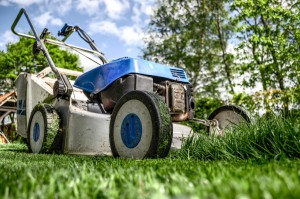 pielęgnacja ogrodów, pielęgnacja terenów zieleni, całoroczna pielęgnacja roślin, abonament ogrodniczy, opieka nad ogrodem, strzyżenie trawników, koszenie trawy, przycinanie żywopłotów, cięcie drzew, opryski trawnika, opryski roślin, nawożenie trawnika, nawożenie roślin, aeracja trawnika, wertykulacja trawnika, przygotowanie trawnika po zimie