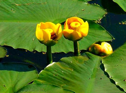 Rośliny do stawów kąpielowych